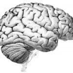 Din hjerne – Version 1.1